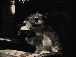 guinnsquirrel